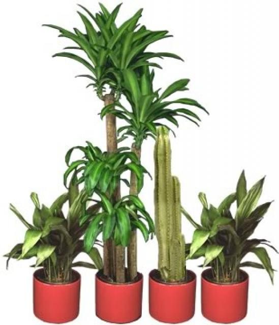 Tropical house plants names - Names of indoor plants ...